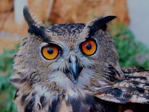 Owl14918_640